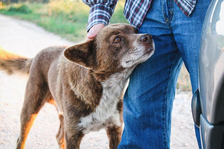 dog-walker-learning-english