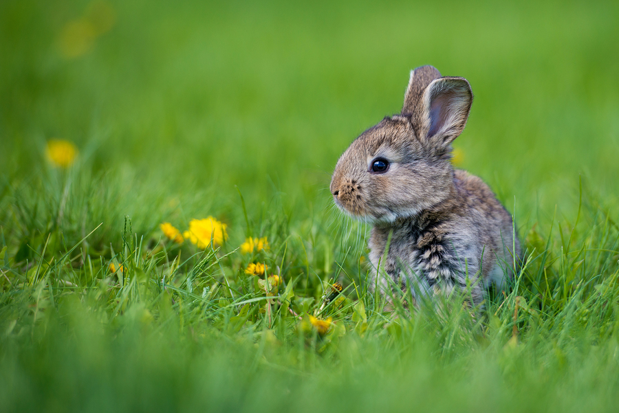 a spring rabbit in a field